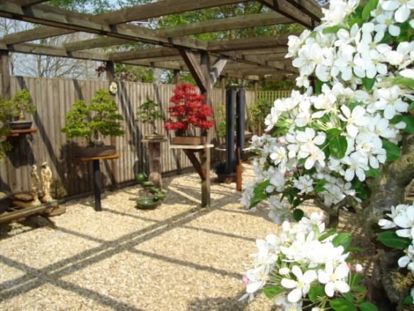 Backyard Bonsai Garden : bonsai garden